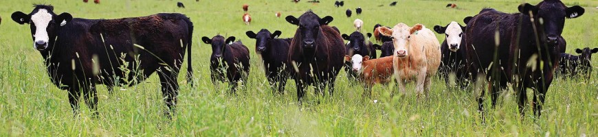 CCA Applauds Expansion of Beef Access to China