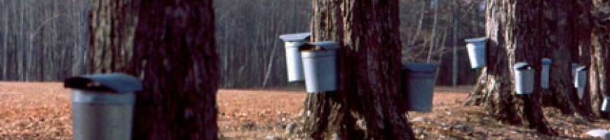 WESTERN ONTARIO - Early March cold snap saved maple syrup season