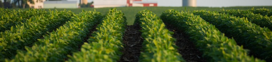 WESTERN ONTARIO: Below Average Soybean Yields Expected