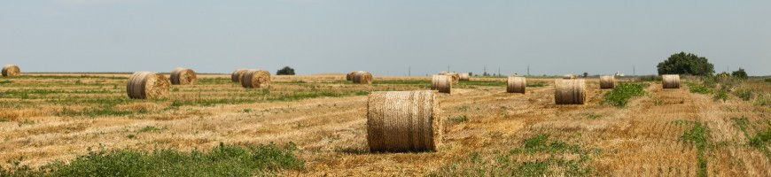 Elmira Hay and Straw Auction Continues Successful Record