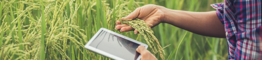 How farmers and processors can stay innovative
